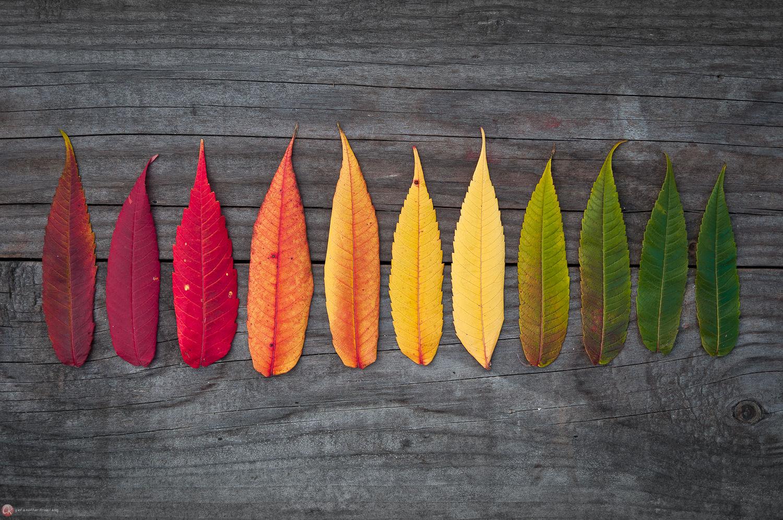 Herbstliches Farbspektrum (auf Holz)