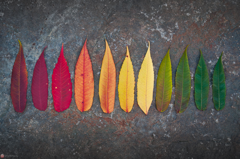 Herbstliches Farbspektrum (auf Stein)